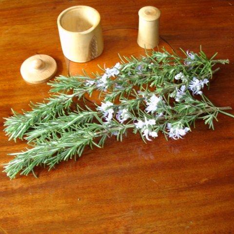 Herbs. Medical Herbalist, Medical Herbalist Books, Medical Herbalist Training, Medical Herbalist Courses, Christina Stapley Medical Herbalist