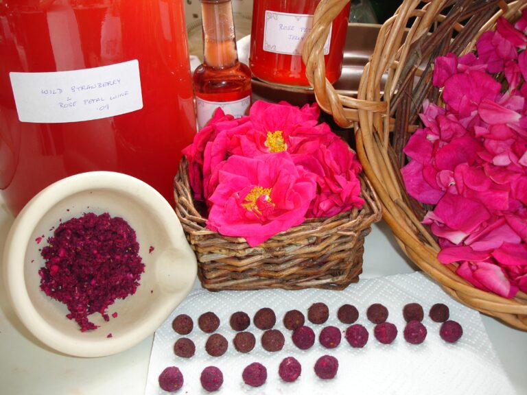 Wild Strawberry and Rose Petals and wine. Medical Herbalist, Medical Herbalist Books, Medical Herbalist Training, Medical Herbalist Courses, Christina Stapley Medical Herbalist